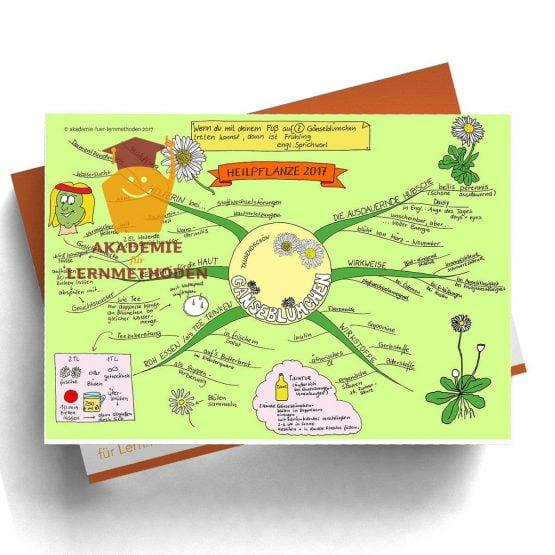 Mindmap Gänseblümchen  - Papierformat
