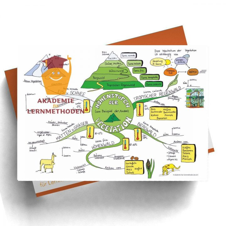 Mindmap zum Thema Höhenstufen der Vegetation in Farbe