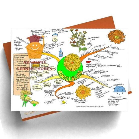Mindmap zum Thema Ringelblume in Farbe