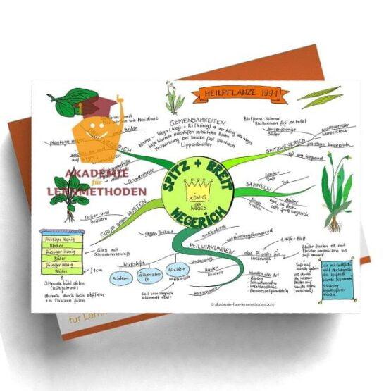 Mindmap zum Thema Spitz-und Breitwegerich in Farbe