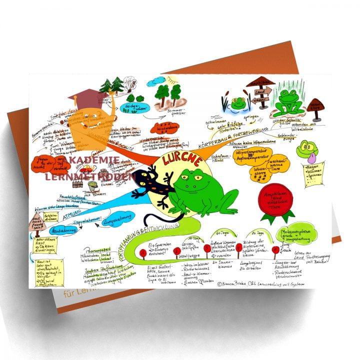 Mindmap zum Thema Lurch in Farbe