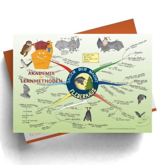 Mindmap zum Thema Fledermaus in Farbe