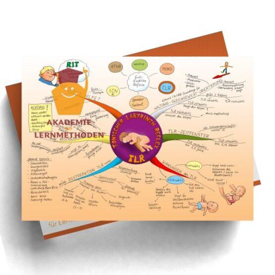 Mindmap zum Thema Reflex TLR in Farbe