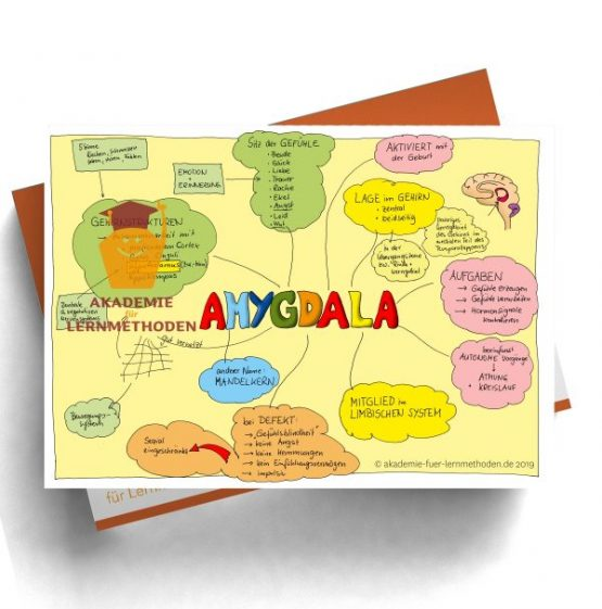 KAWA Amygdala in Farbe