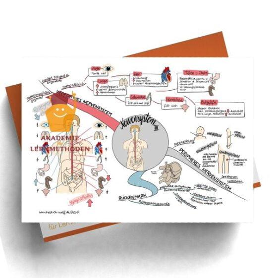 Mindmap zum Thema Nervensystem III