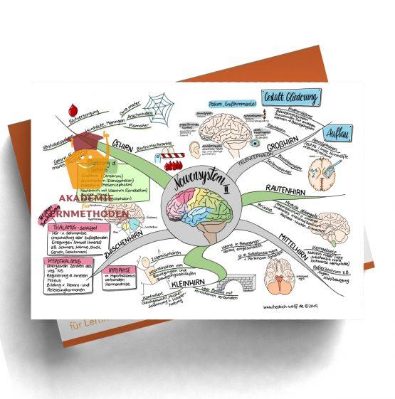 Mindmap zum Thema Nervensystem II