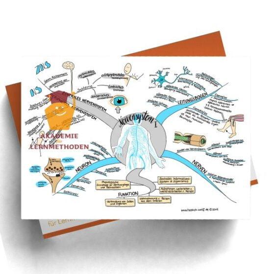 Mindmap zum Thema Nervensystem I