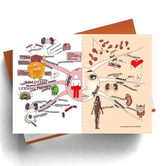 Mindmap zum Thema Anämie - Blässe