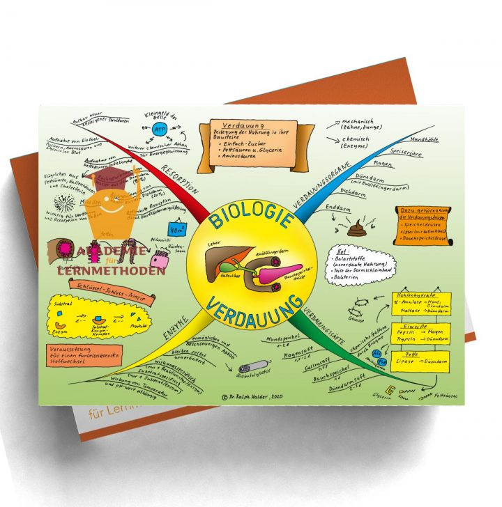 Mindmap über die Verdauung in Farbe