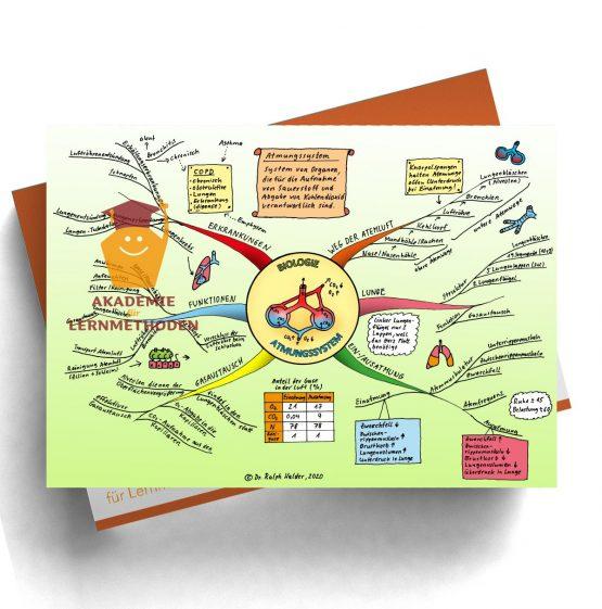 Mindmap zum Thema Atemwege