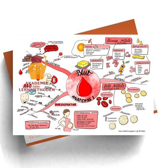 Mindmap zum Thema Blut Anatomie 1 für den med. Heilpraktiker