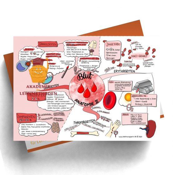Mindmap zum Thema Blut Anatomie 2 für den med. Heilpraktiker
