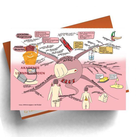 Mindmap zum Thema Blut Physiologie 1 für den med. Heilpraktiker