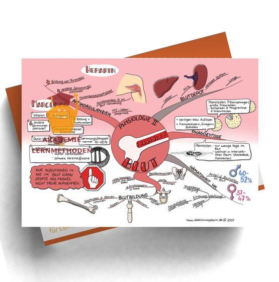 Mindmap zum Thema Blut Physiologie 2 für den med. Heilpraktiker