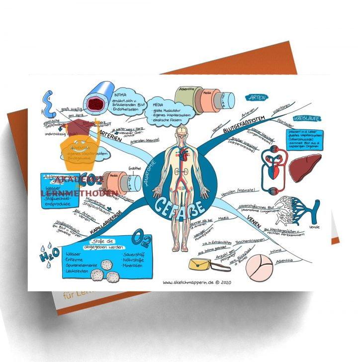 Mindmap zum Thema Gefäße Anatomie für den med. Heilpraktiker