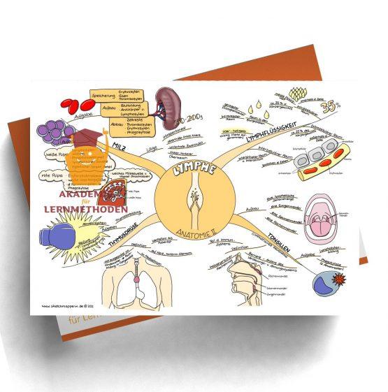 Mindmap zum Thema Lymphe_Anatomie II für den med. Heilpraktiker