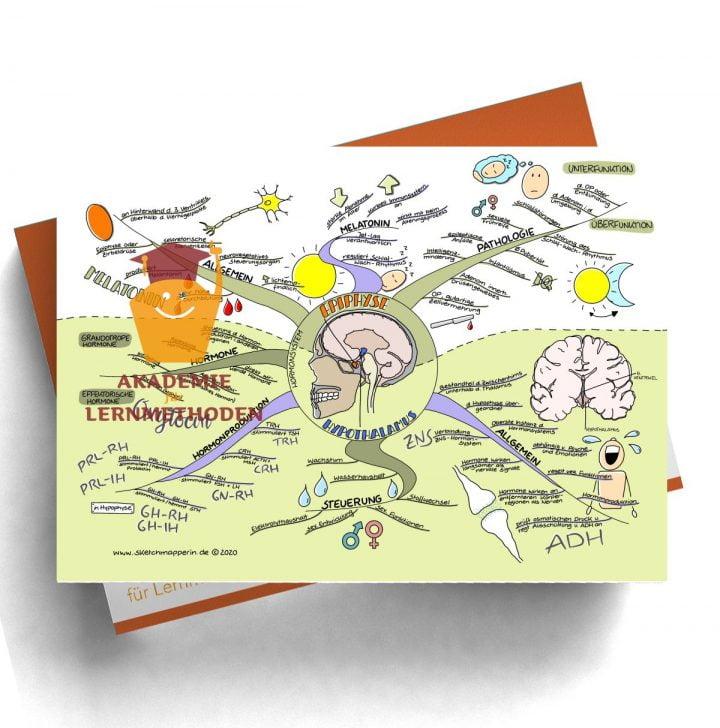 Mindmap für den med. HP zum Thema 29 Hormonsystem, Epiphyse