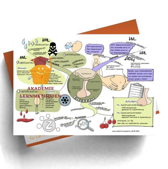Mindmap für den med. HP zum Thema 29 Hormonsystem, Hypophyse