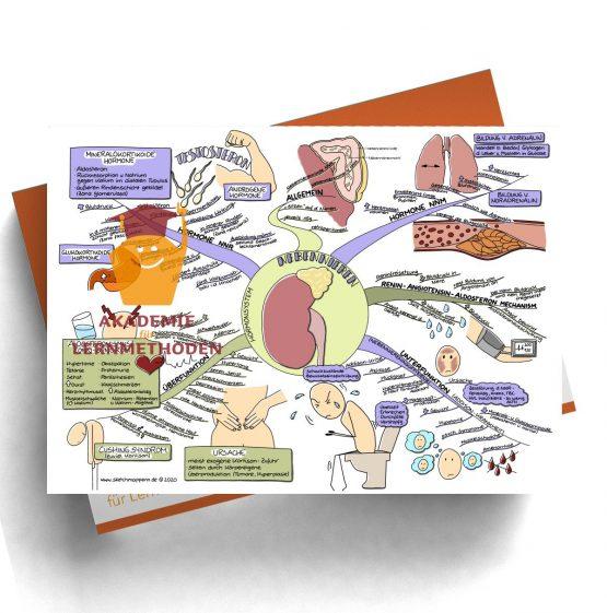 Mindmap für den med. HP zum Thema 29 Hormonsystem, Nebennieren
