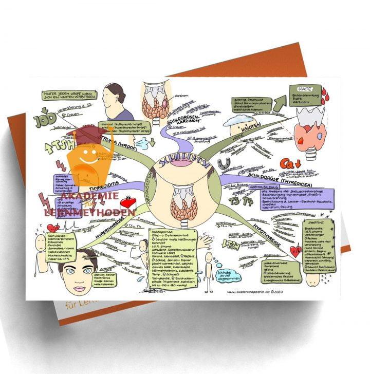 Mindmap für den med. HP zum Thema 29 Hormonsystem, Schilddrüse