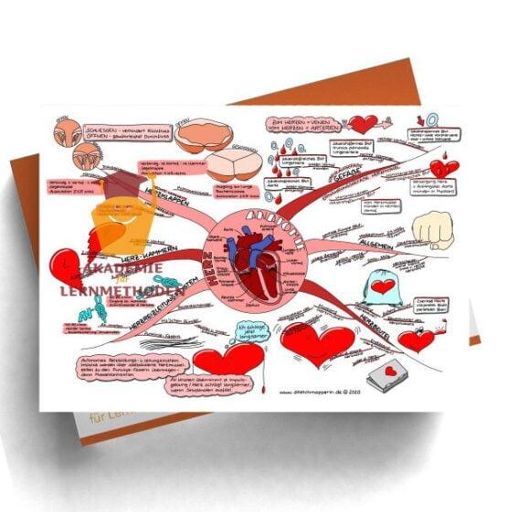 Mindmap für den med. HP zum Thema Herz Anatomie