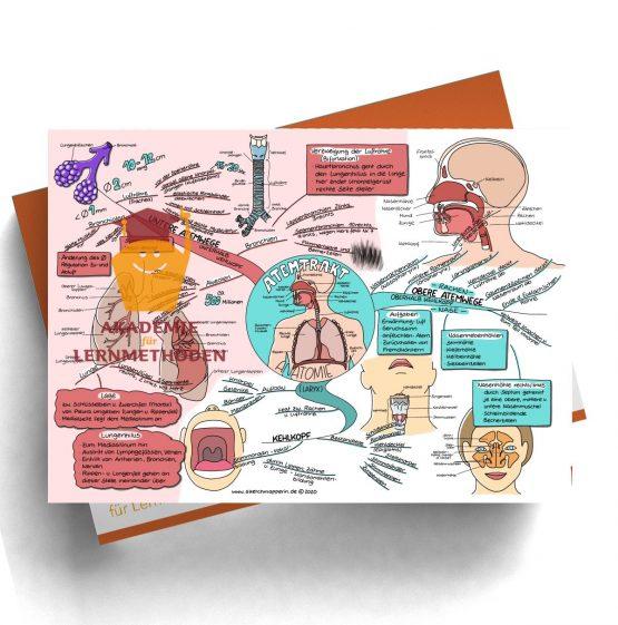 Mindmap für den medizinischen Heilpraktiker zum Thema Atemtrakt Anatomie