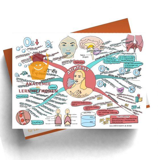 Mindmap für den medizinischen Heilpraktiker zum Thema Atemtrakt Physiologie
