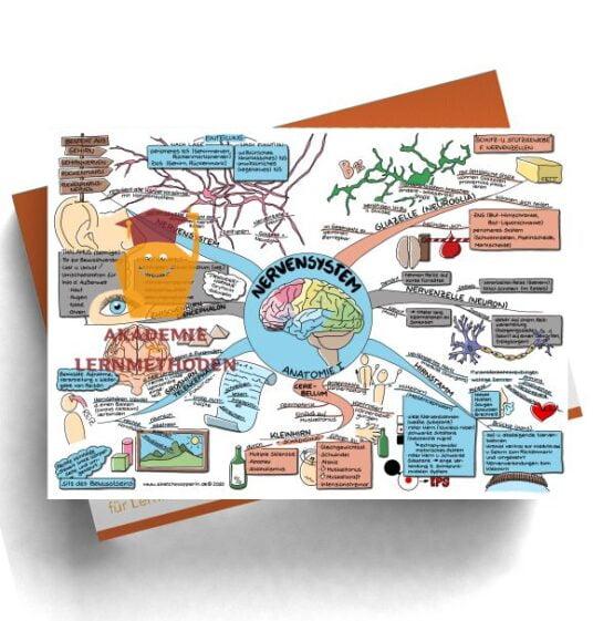 Mindmap zum Thema Nervensystem für den med. Heilpraktiker - Prüfungswissen
