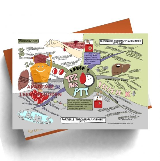 Mindmap zum Thema Labor 3