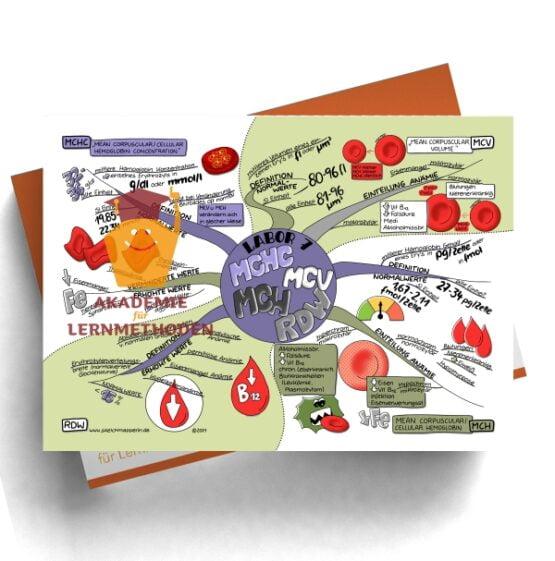 Mindmap zum Thema Labor 7