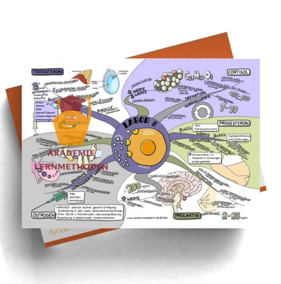 Mindmap zum Thema Labor 8