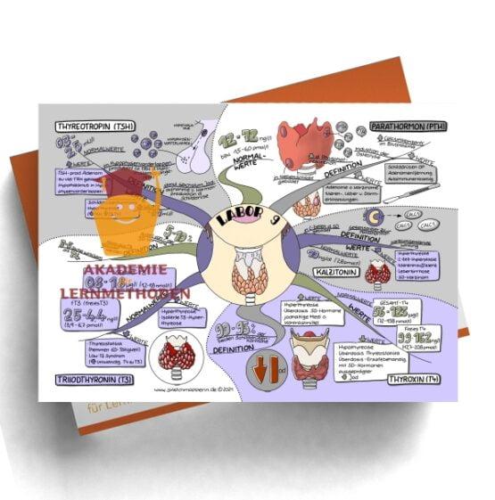 Mindmap zum Thema Labor 9