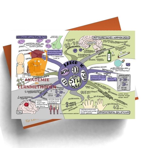 Mindmap zum Thema Labor 10