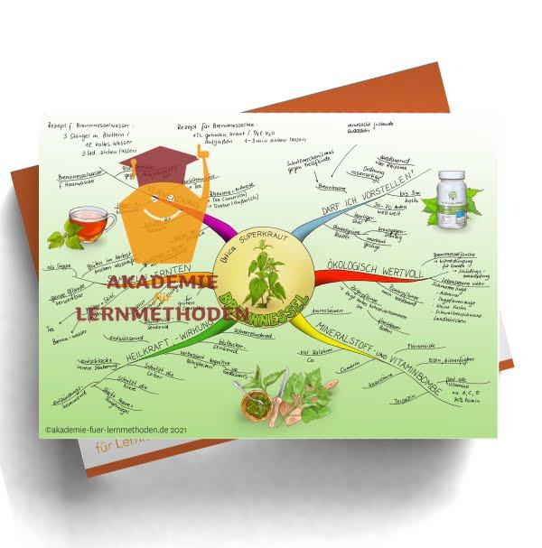 Mindmap zum Thema Brennnessel